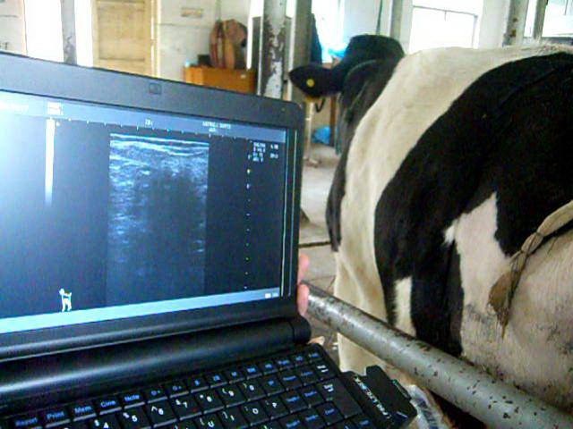 "10.1 "" TFT LCD Equine Veterinary Ultrasound Scanner Animal Ultrasonic Equipment"
